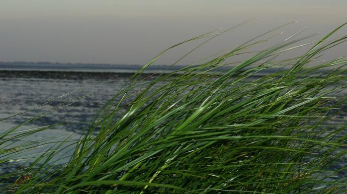 grass-442277_1280