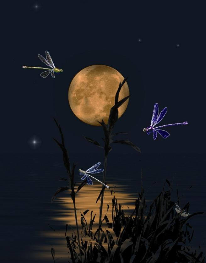 dragonflies-407713_1280.jpg