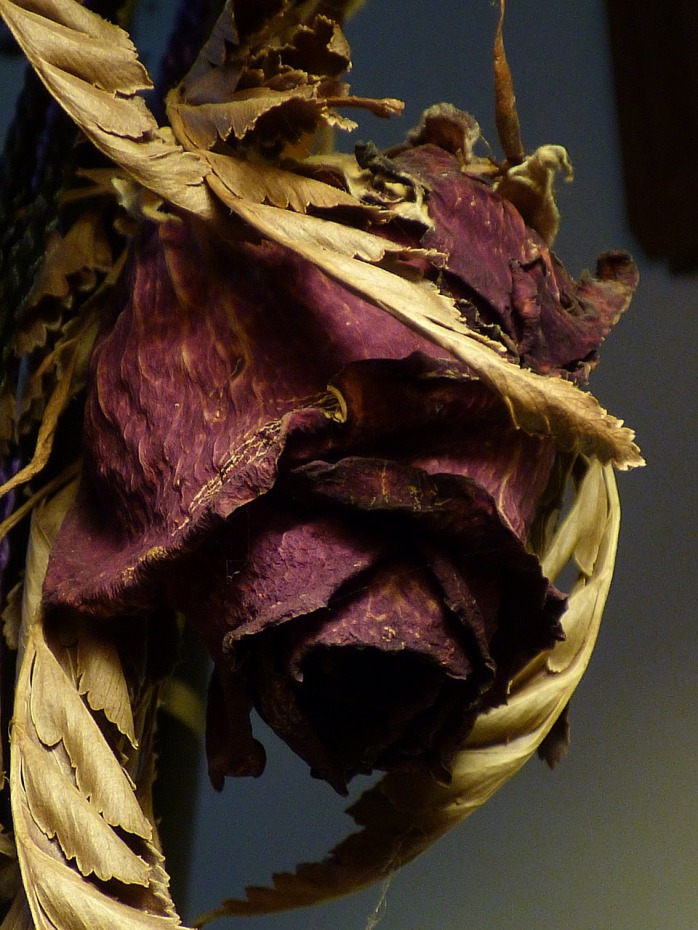 dried-rose-1145180_1280