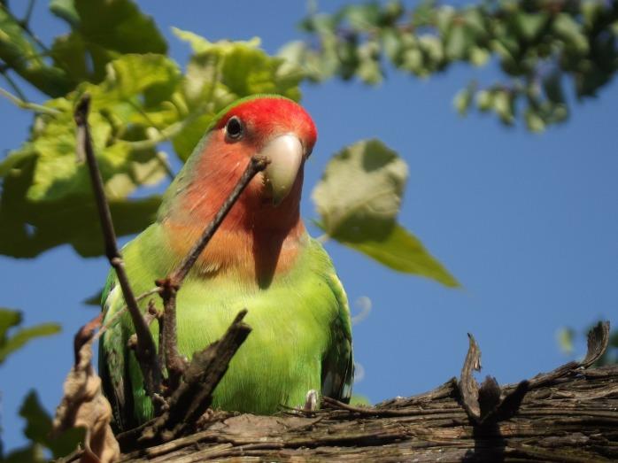 parrot-185600_1280