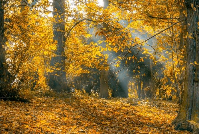 autumn-2444046_1280