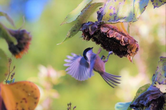bird-2854435_1280