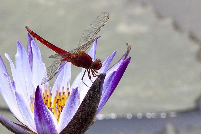 flowering-2554710_1280