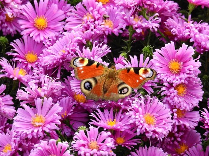 flowers-1729438_1280
