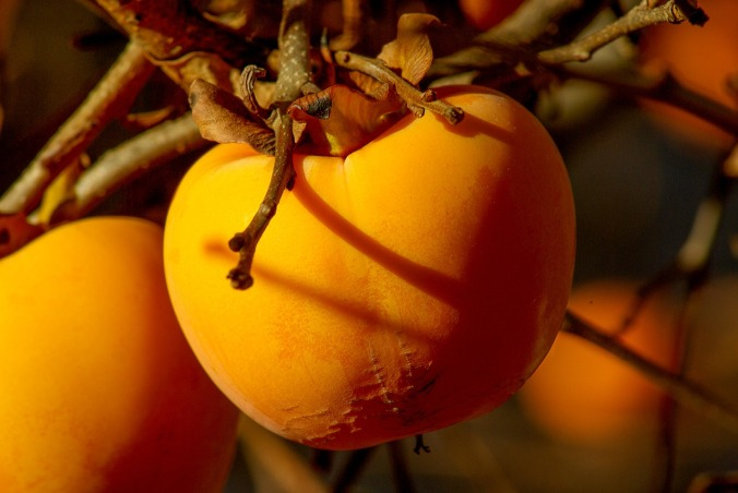 fruit-1066097_1280