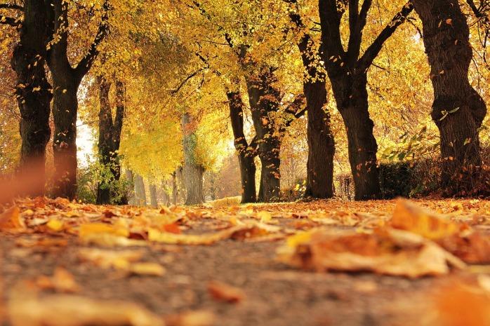 trees-1789120_1280