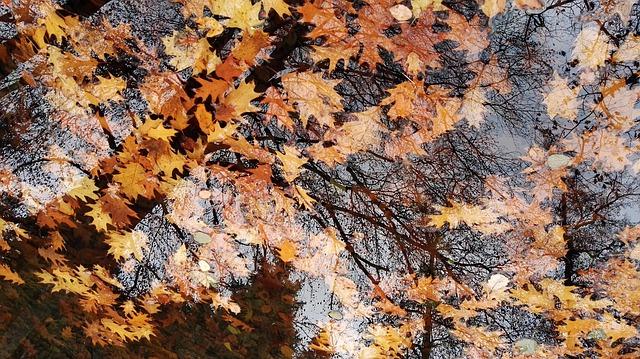 autumn-1862643_640