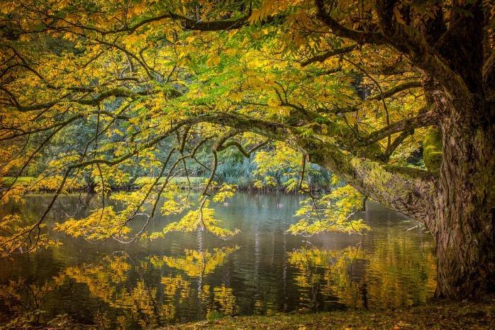 autumn-2722844_1280