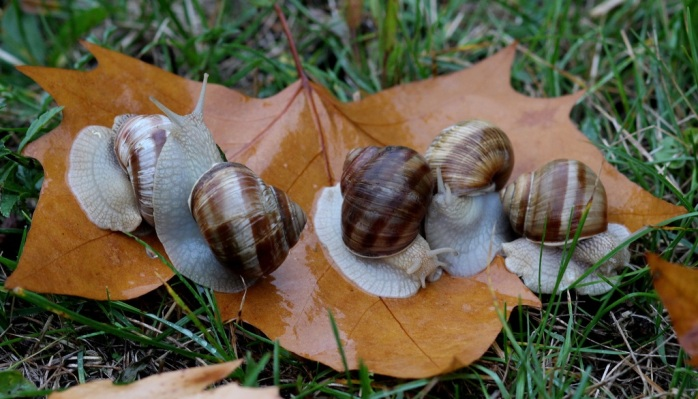 nature-rain-leaf-autumn-fauna-shell-1276304-pxhere.com